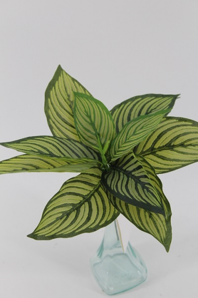 Mazzo foglie Caladio
