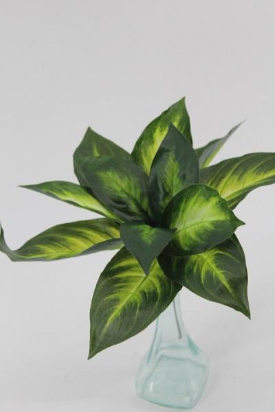 Mazzetto foglie Diffenbachia