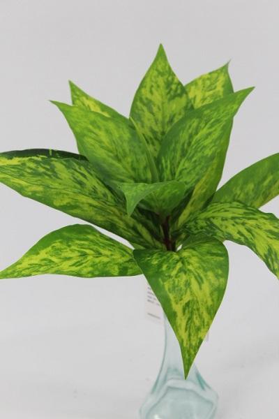 Mazzetto foglie Dracena