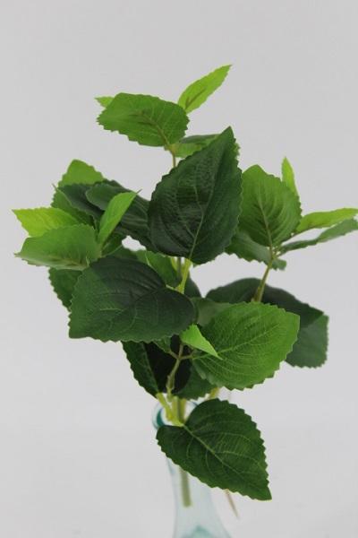 Mazzo foglie Fittonia