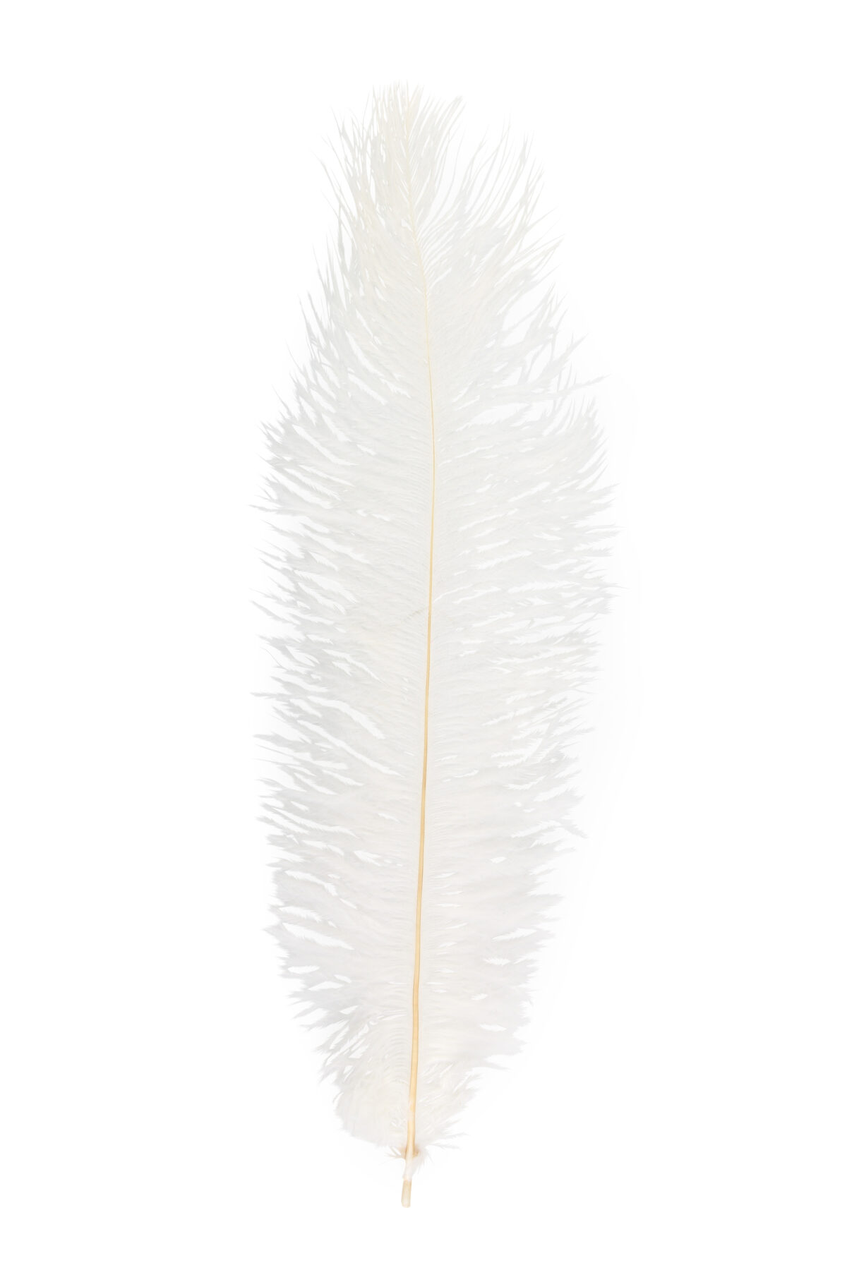 Piume di struzzo