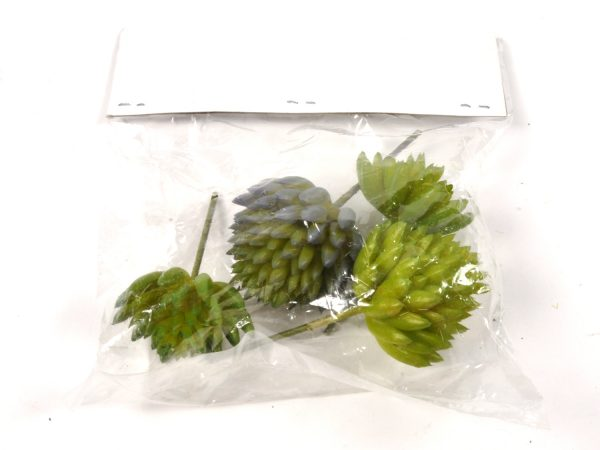Cactus ball 4pz in polybag verde