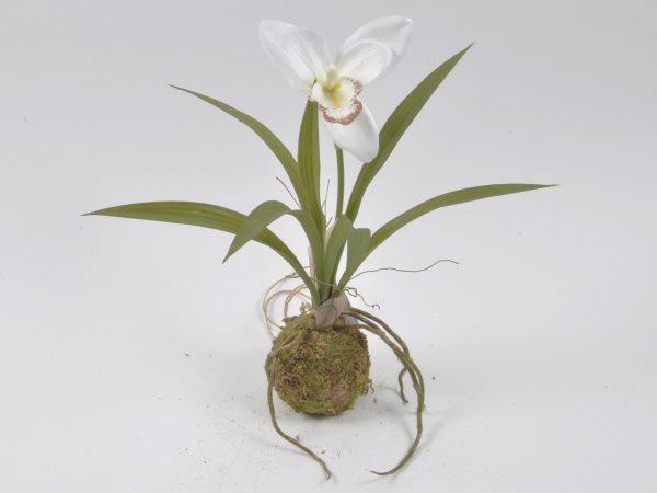 Orchidea singola su muschio