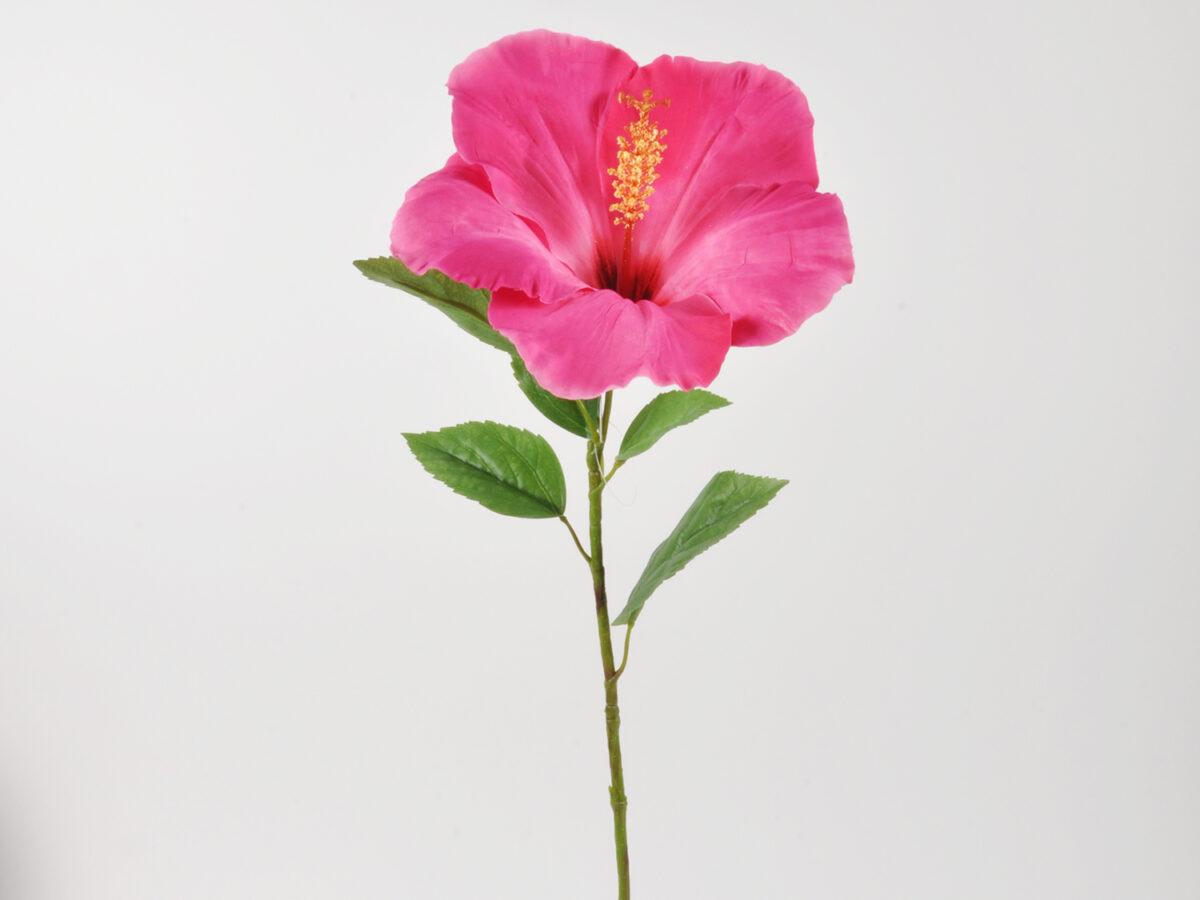 Hibiskus ramo singolo