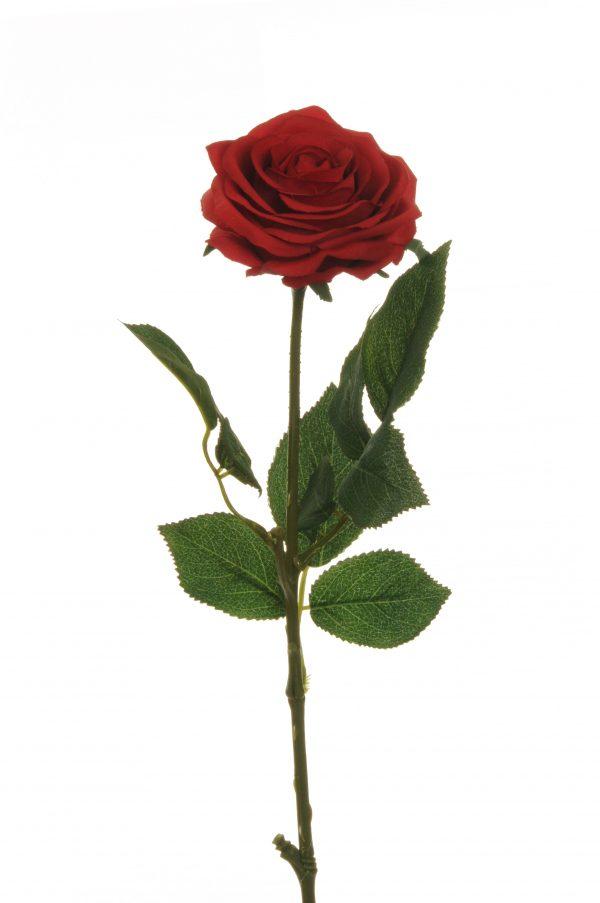Rosa dell'Ecuador