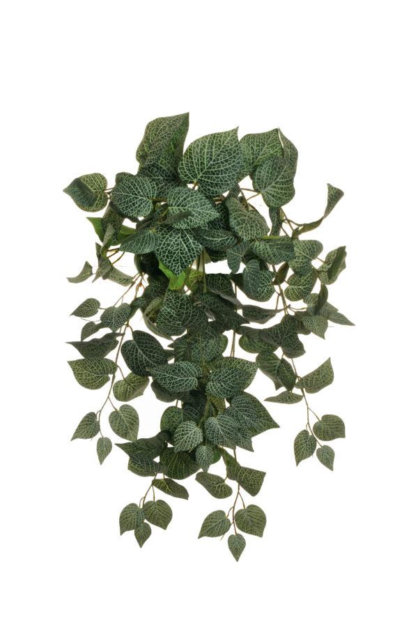Pianta pendente di coleus con 10 rami e 120 foglie verde 62 cm