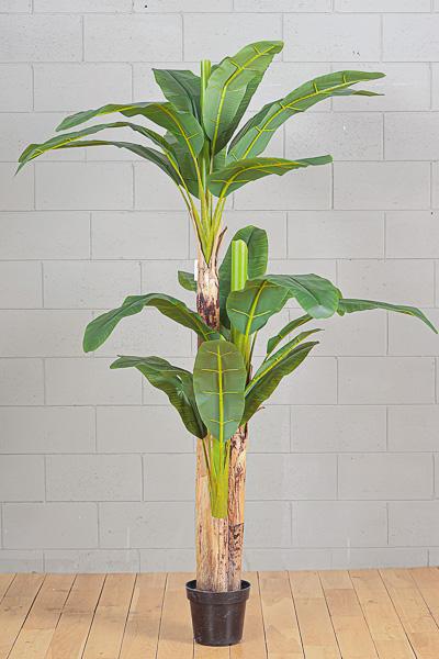 Pianta Banano Artificiale h. 240cm