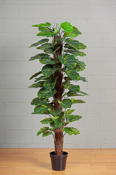 Pianta Artificiale di Pothos in vaso h. 180 cm