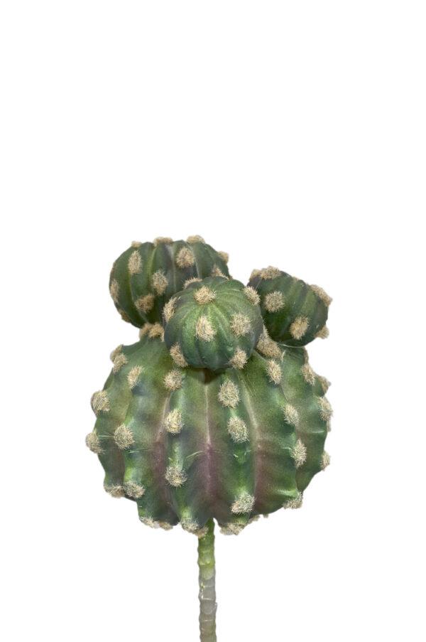 Cactus artificiale bombato 22,5 cm