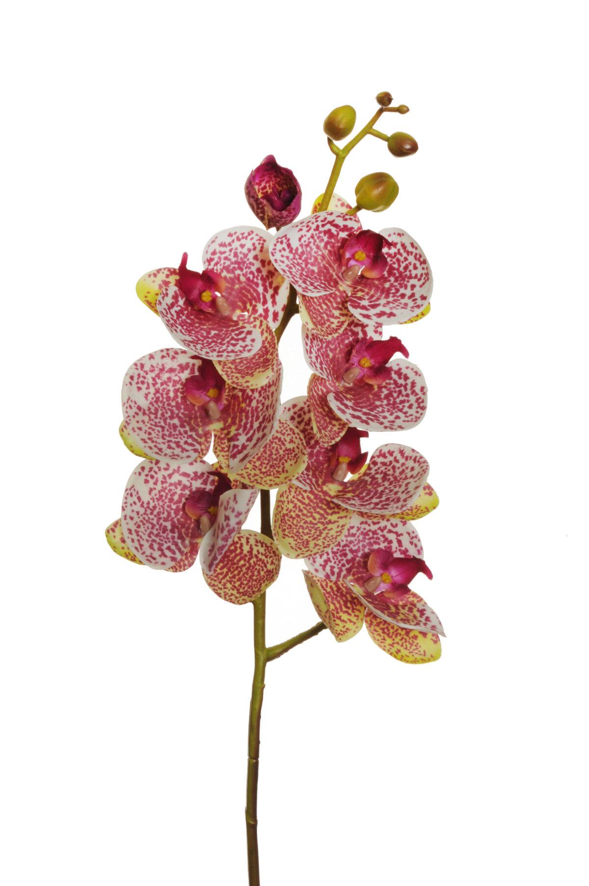 Orchidea phalenopsis artificiale con 7 fiori e 5 boccioli bianca con macchie viola 72 cm