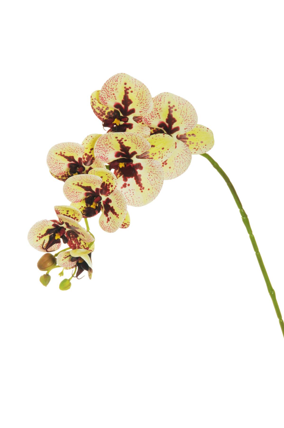 Ramo di orchidea phalenopsis artificiale dipinta in 3D di colore giallo chiaro e rosso burgundy con 7 fiori 77 cm
