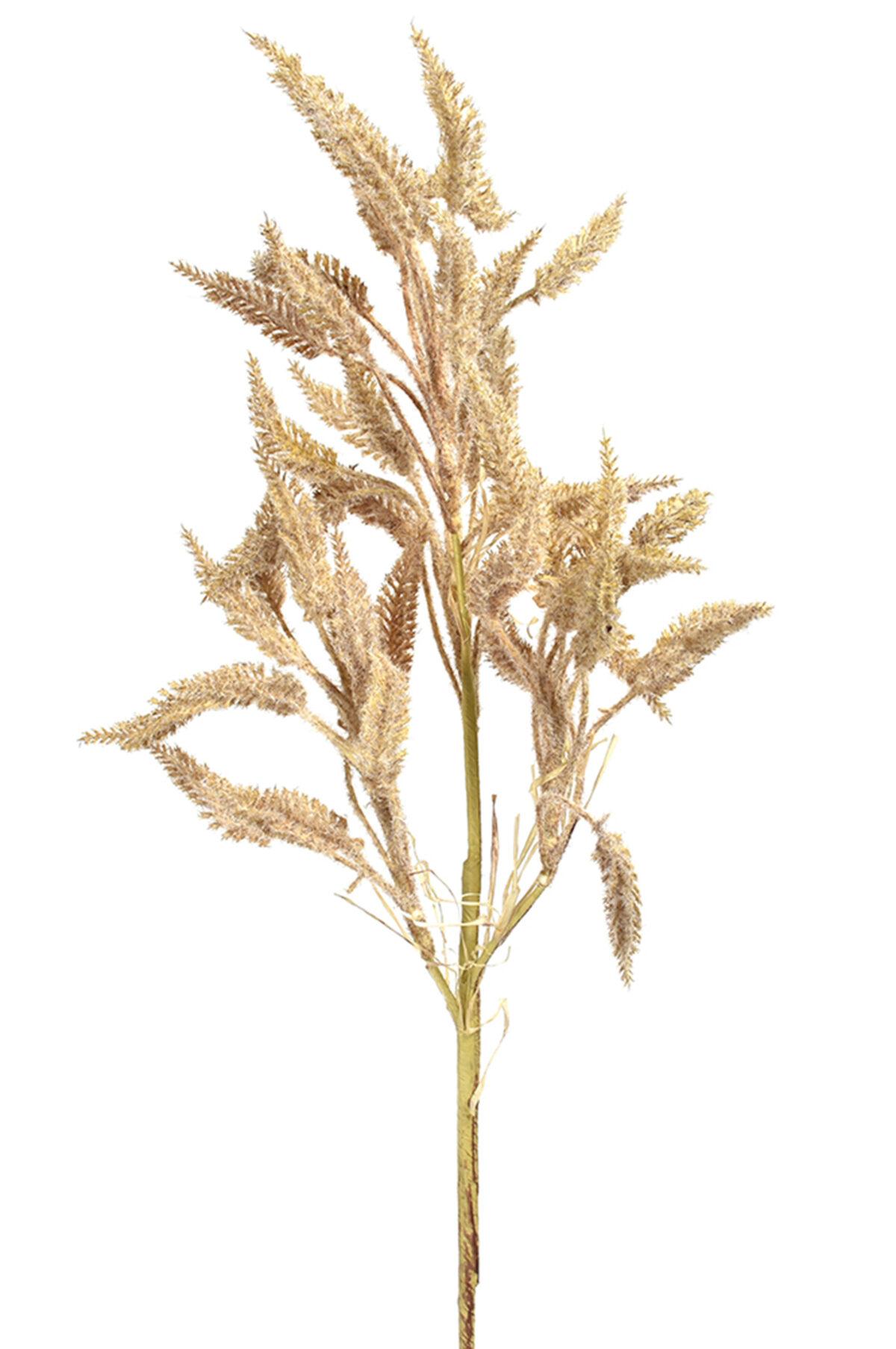 Stelo d'erba color naturale secco e stabilizzato 75 cm