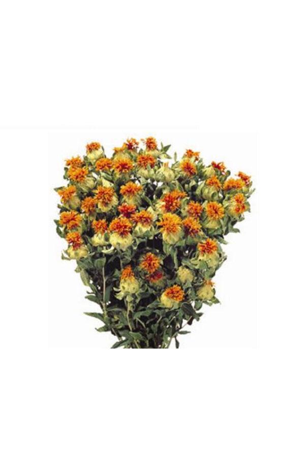 Mazzo di cartamo - zafferanone secco e stabilizzato di colore arancione