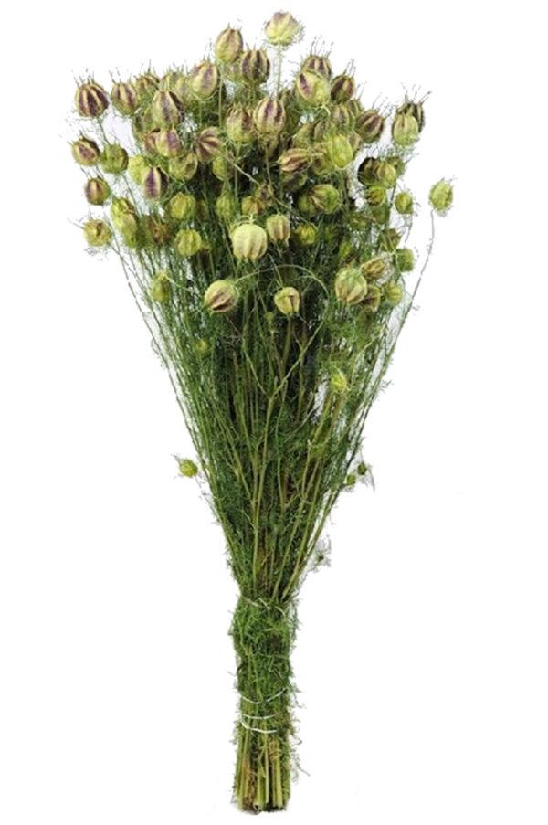 Mazzo di nigella secca e stabilizzata verde e bianca