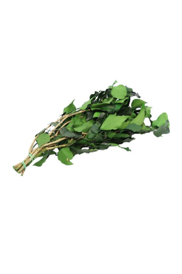 Mazzo di edera verde essiccata e stabilizzata 150 gr.