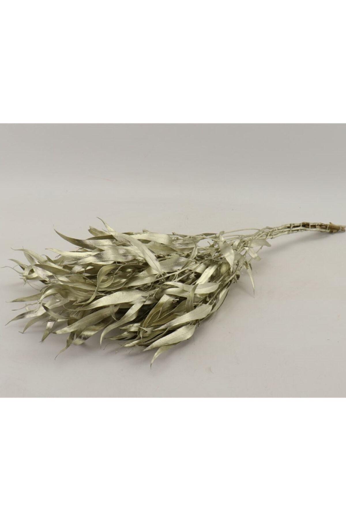 Mazzo di foglie di eucalipto secche e stabilizzate color platino