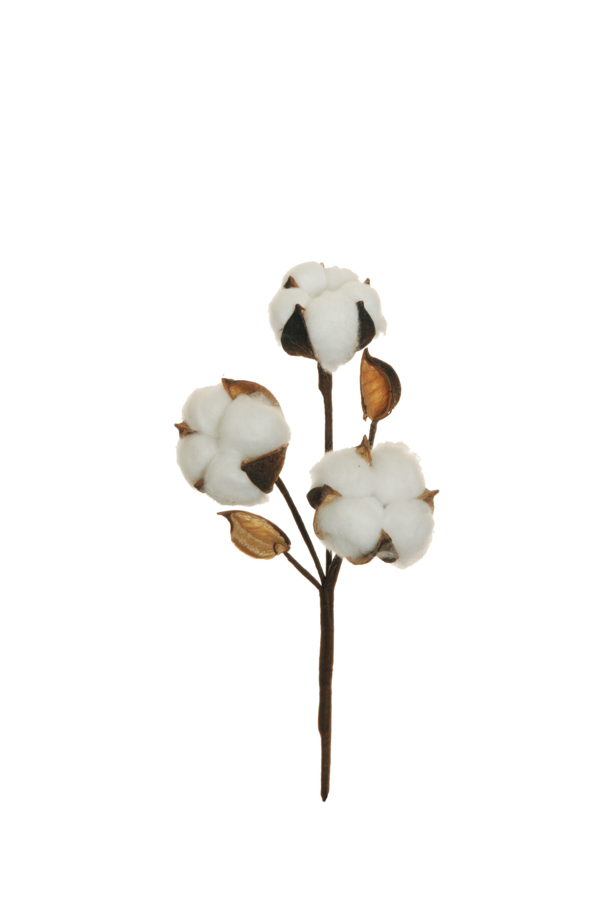 Ramo di cotone naturale con stelo artificiale con 3 fiori e 2 boccioli h. 29 cm