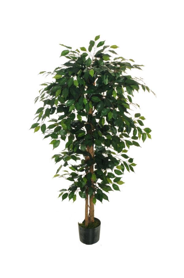 Pianta di ficus benjamin artificiale con 924 foglie, 2 tronchi e 2 liane intrecciate con vaso nero in platica h. 150 cm, d. vaso 18 cm