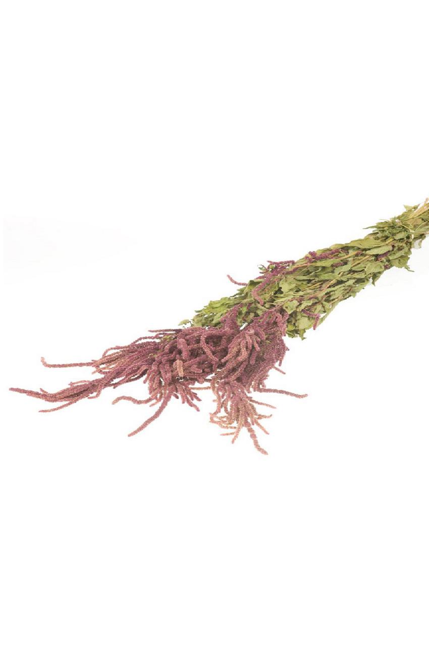 Mazzo di Amaranto Caudato naturale secco e stabilizzato di colore rosso