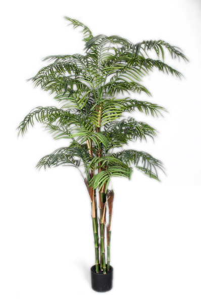 Pianta Artificiale Palma Kentia o palma di paglia con 1257 foglie verdi in vaso nero di plastica rigida h. 180 cm