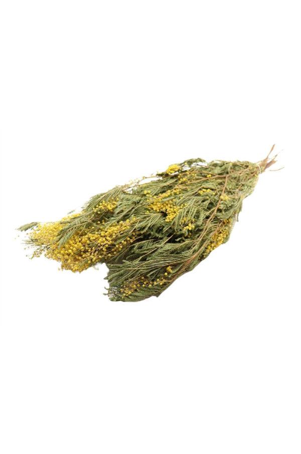 Mazzo di fiori di Mimosa essiccata e stabilizzata di colore giallo naturale 250 gr.