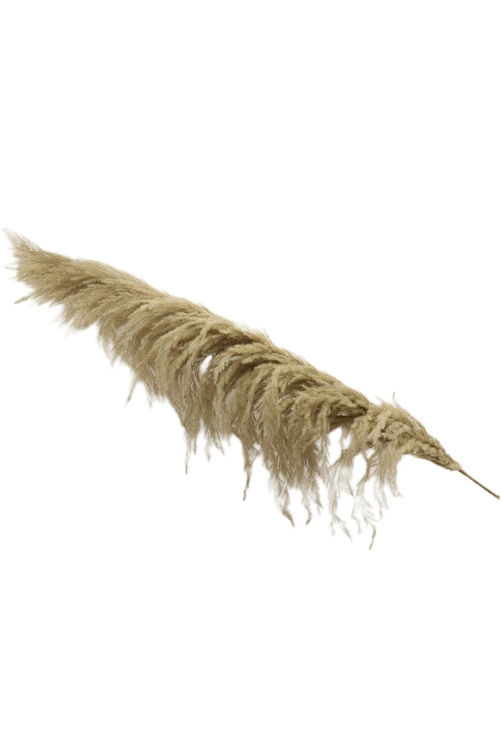 Stelo di Pampas Grass gigante colore naturale h. 210 cm