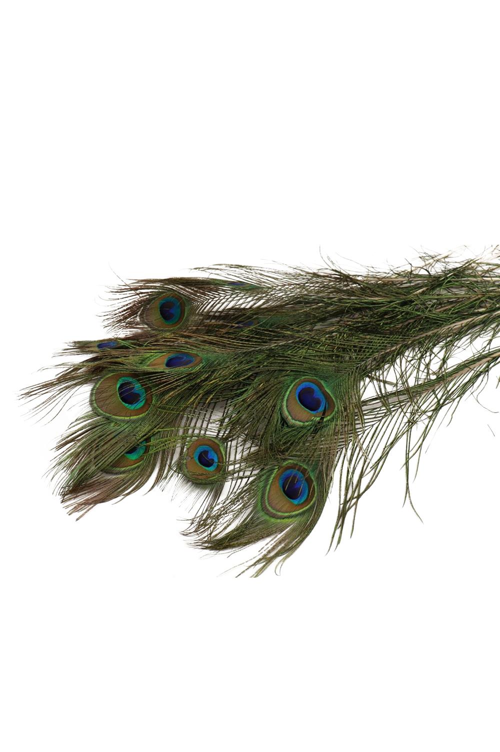 Piuma di Pavone decorativa 45/50 cm