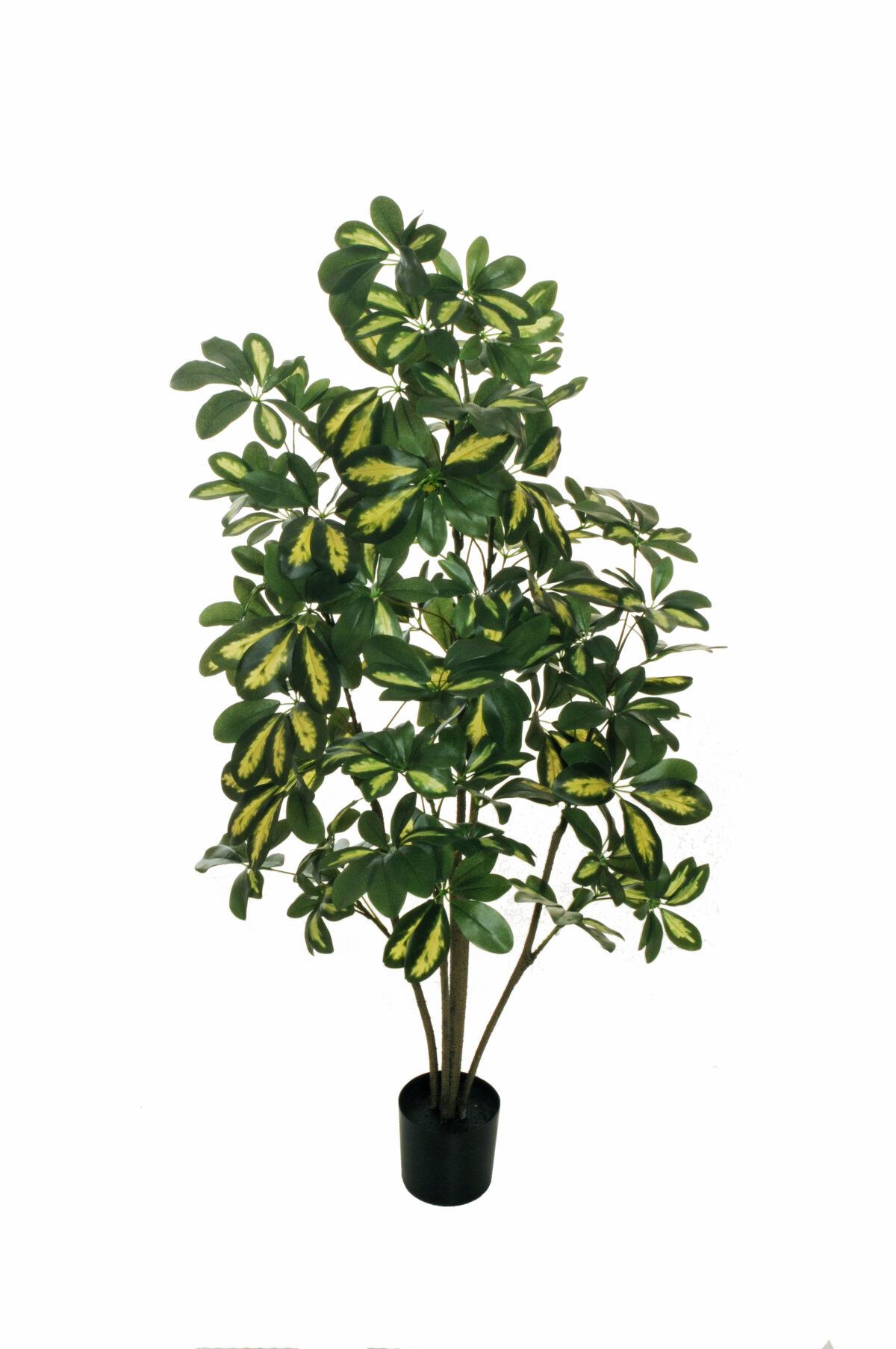 Pianta artificiale di Schefflera tropicale con 476 foglie verdi variegate, 5 tronchi, con vado in plastica nero d. 12,5 x h. 11,5 cm; h. pianta 120 cm