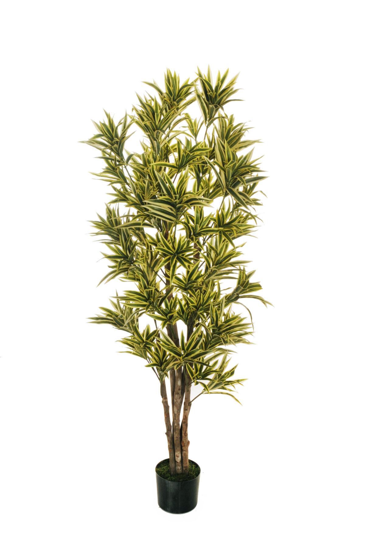 Pianta artificiale di Dracena con 2320 foglie variegate, 6 tronchi e con vaso nero plastica d. 18 cm x 14,5 cm, h. pianta 170 cm