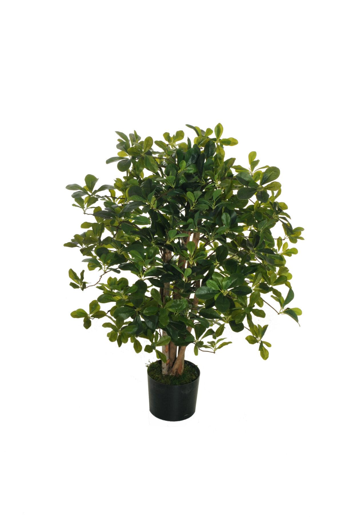 Pianta artificiale di Pitosforo o Pittosforum con 1176 foglie verde in vaso di plastica nero d. 17,5 x h. 14,5 cm, h. pianta 90 cm