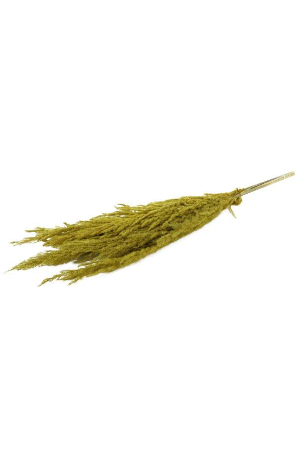 Set 8 Steli di Pampas Grass di colore giallo h. 120 cm