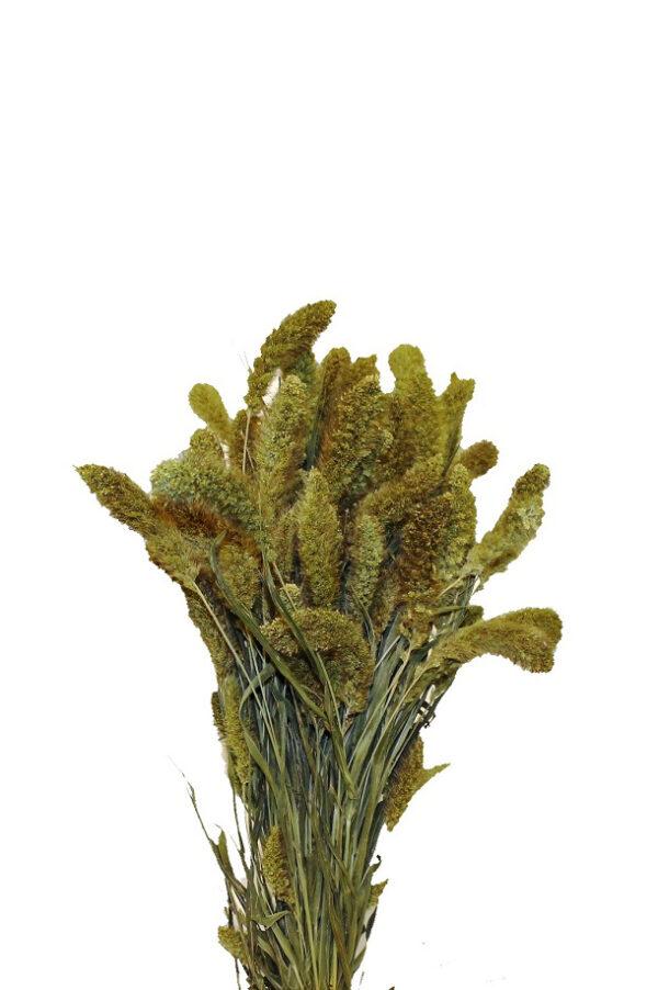 Mazzo di fiori Setaria verde essiccata e stabilizzata