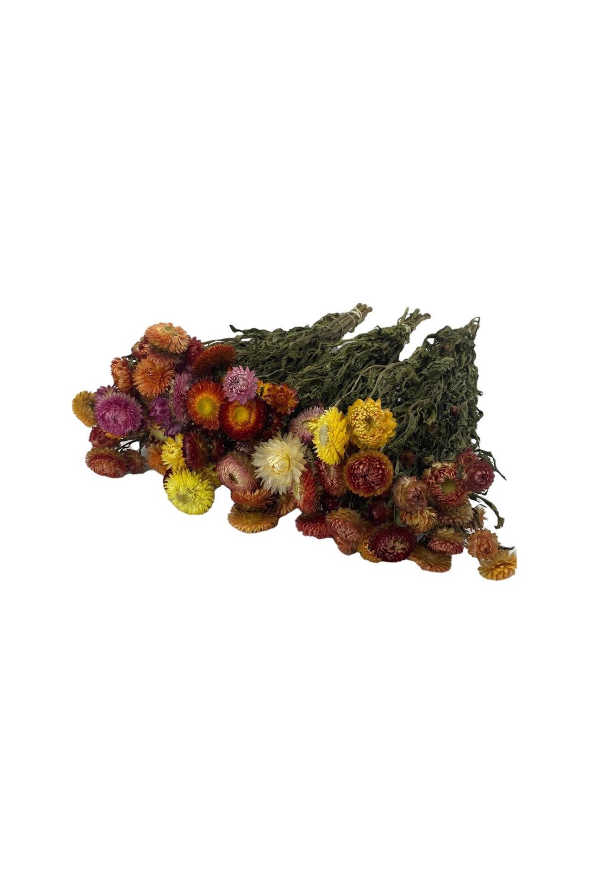 Mazzo di fiori di Elicriso essiccato e stabilizzato colori mix