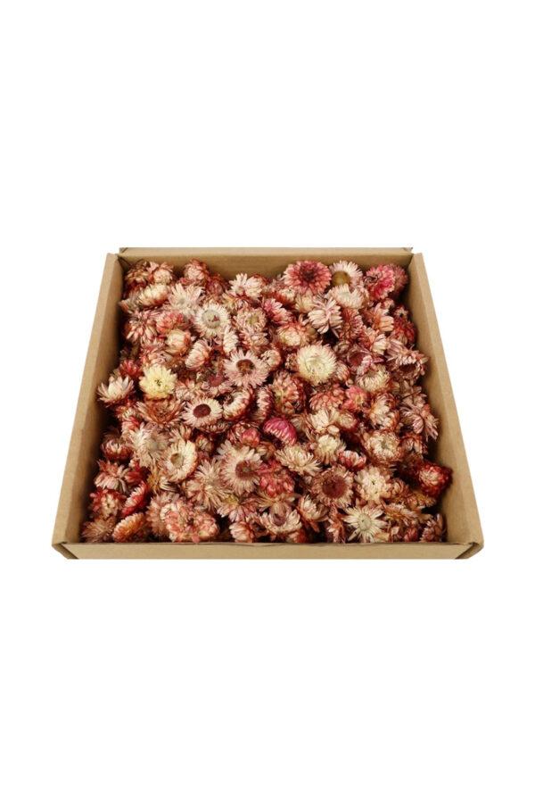 Box contenente teste di fiori di Elicriso essiccati e stabilizzati rosa (dim. scatola: l. 25 x h. 10 cm)