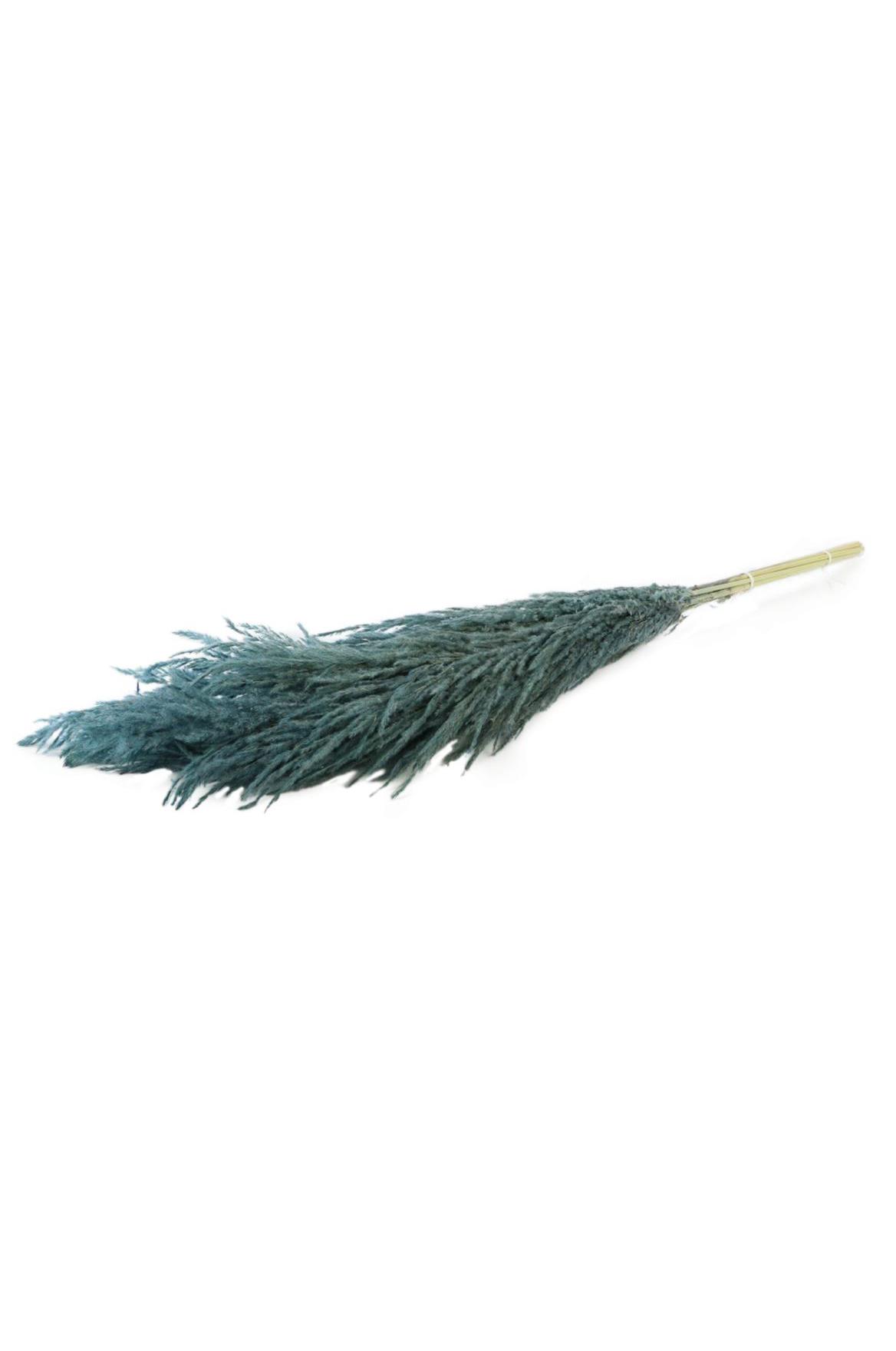 Set 8 Steli di Pampas Grass di colore celeste h. 120