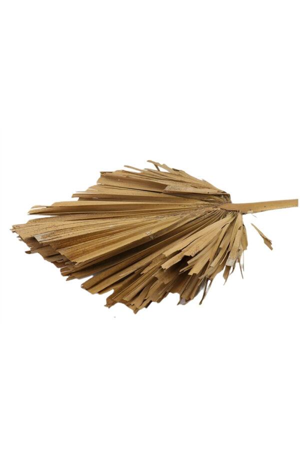 Foglia decorativa di Palma King Spear XL essiccata e stabilizzata di colore naturale l. 110 x 45 cm